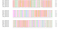 ZNF226 Ortholog Multiple Sequence Alignment 4.png
