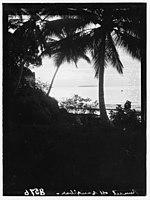 Zanzibar. Sunset through grove of royal palms LOC matpc.00403.jpg
