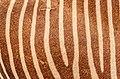 Zebra skin.jpg