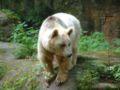 Zoo-nuernberg-2006-braunbaer2.jpg