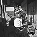 """""""Prosena baba"""" zadnji snop- iz običajev pri mencanju prosa, Zgornji Lakenc 1951.jpg"""