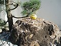 'hide' fans memorial tribute 05-03-2008.jpg