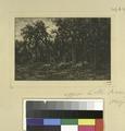 (La petite forêt, hiver.) (NYPL b14923834-1226140).tiff