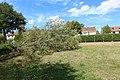 Étang du Perray au Perray-en-Yvelines le 3 août 2017 - 66.jpg