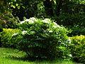 Ботанічний сад ім. І.Фоміна IMG 9198.jpg