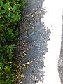 Братська могила №4 Борзна центр 12.jpg