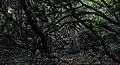 В день як в ночі. Польський ліс.jpg