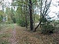 В лесу... - panoramio.jpg