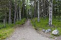 Дорога на Секирную гору MG 2285.jpg