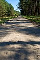 Дорога через ліс. Мале полісся.jpg
