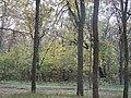 Олександрія - panoramio (1).jpg