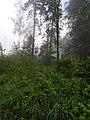 Парк лосиный остров5.jpg