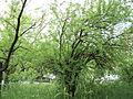 Парк шума Гази Баба во мај (168).JPG