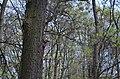 Парк ім. О.І. Ющенка у Вінниці. Фото 2.jpg