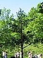 """Петергоф, фонтан-шутиха """"Дубок"""". 9.06.2011.jpg"""