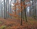 Пуща-Водицький лісопарк, Київ 01.jpg