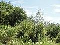Река Кудьма - panoramio (1).jpg