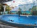 Сочинский дельфинарий парка «Ривьера». 68.jpg