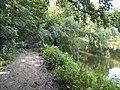 Украина, Киев - Голосеевский лес 188.jpg
