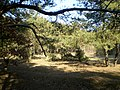 У лесе - panoramio.jpg