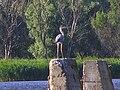 Яхтклуб, берег Каховского водохранилища - panoramio.jpg