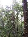 อุทยานแห่งชาติ แม่วงก์ - panoramio (6).jpg