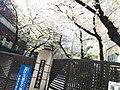 六本木中学校.jpg