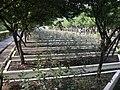 士林官邸20080406 - panoramio - Tianmu peter (8).jpg