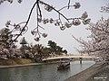 宇治川 - panoramio (1).jpg
