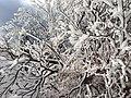 御在所 樹氷 - panoramio.jpg