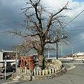 御所市にて 白龍大明神とサイカチの木 2012.4.07 - panoramio.jpg