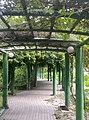 植物園中的植物及樹木花草(包括歷史遺跡)-42.jpg
