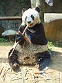 福州熊猫世界-熊猫巴斯03.jpg