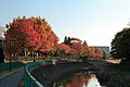紅葉の境川, Sakai river with Coloured leaves - panoramio.jpg