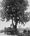 판문점 도끼만행사건 관련 미루나무 제거 작업.jpg