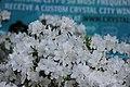04.CrystalCity.WaterPark.Arlington.VA.26April2013 (8694225561).jpg