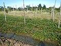 0581jfLandscapes Roads Vegetables Fields Binagbag Angat Bulacanfvf 11.JPG