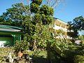 09514jfAlexis G. Santos National High School Liciada, Bustos Bulacanfvf 39.jpg