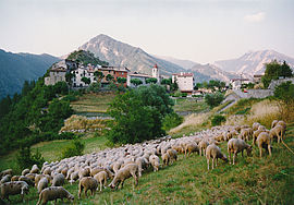 A flock of sheep outside Rigaud village