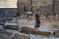 14-11-15-Ausgrabungen-Schweriner-Schlosz-RalfR-023-N3S 4006.jpg