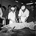 18.05.76 à l'école vétérinaire de Toulouse, opération d'un brocard jeune cerf (1976) - 53Fi909.jpg