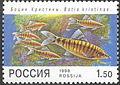 1998. Марка России 0428 hi.jpg