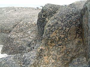 Orbicular granite - Outcrop of orbicular granite near Caldera, Chile.