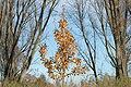 2009-11-19 (15) Tree.JPG