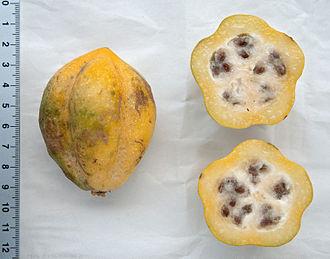 Mountain papaya - A ripe mountain papaya, whole and in cross section (Rift Valley Province, Kenya, September 2011).