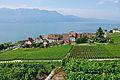 2012-08-12 10-11-48 Switzerland Canton de Vaud Rivaz.JPG