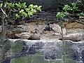 20140818020DR Oelsa (Rabenau) Naturdenkmal Götzenbusch.jpg