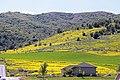 2015.05.30 16.00.10 IMG 2571 - Flickr - andrey zharkikh.jpg