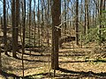 2016-03-01 12 51 53 Forest within Fred Crabtree Park in Reston, Fairfax County, Virginia.jpg