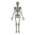 201805 human skeleton anim.png